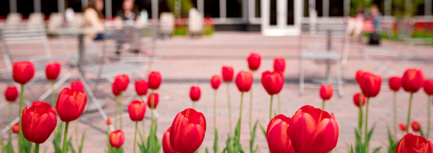 tulips in front of building