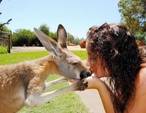 Student and Kangaroo