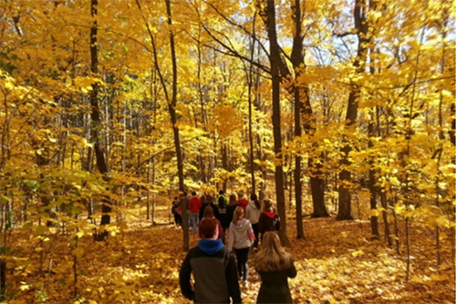 A class hikes through the fall color of the abbey arboretum.